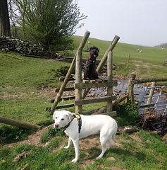 amy and molly on the stile.jpg