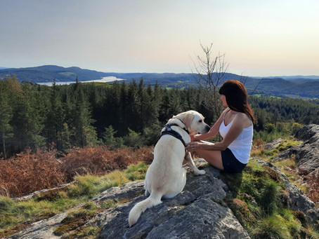 A RECOMMENDED LAKELAND  WALK FOR YOU AND YOUR DOG TO ENJOY