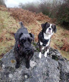 molly and fizz hutton roof.jpg