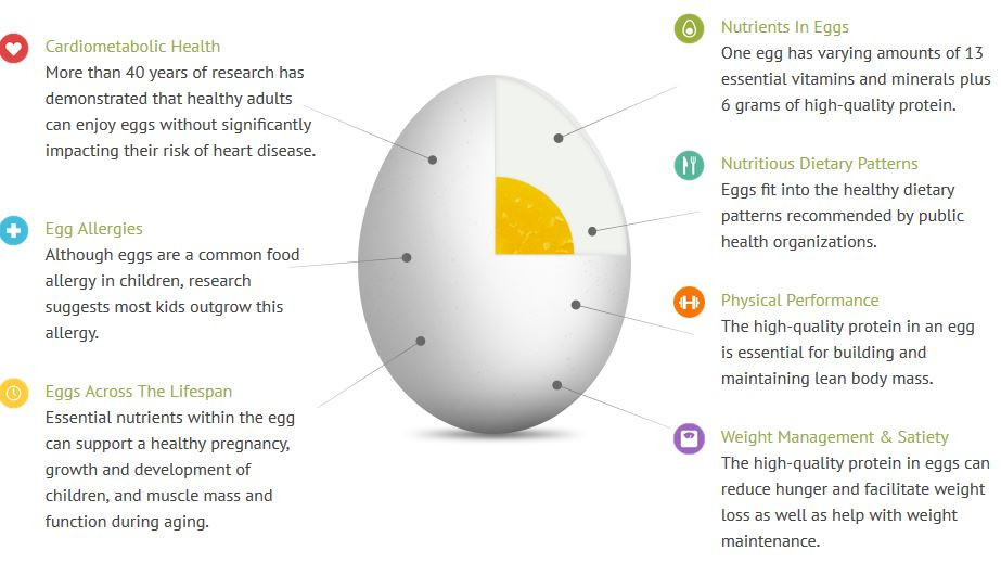 Eggs 101: Facts from Egg Nutrition Center