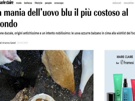 Rassegna stampa - La mania dell'uovo blu