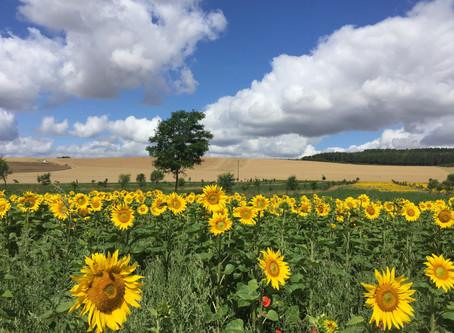 L'agroforesterie, pour la biodiversité et la protection des cultures.