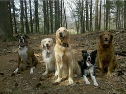 dog hiking group in Waltham