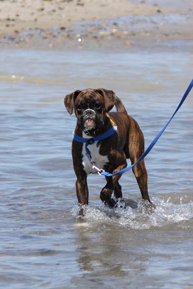 Beach bum Henry