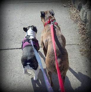 dogs walking in Belmont