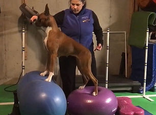canine fitness training