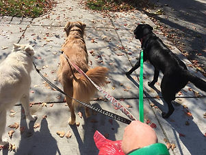 training for dog walking staff