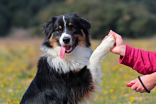 training your dog to do trick