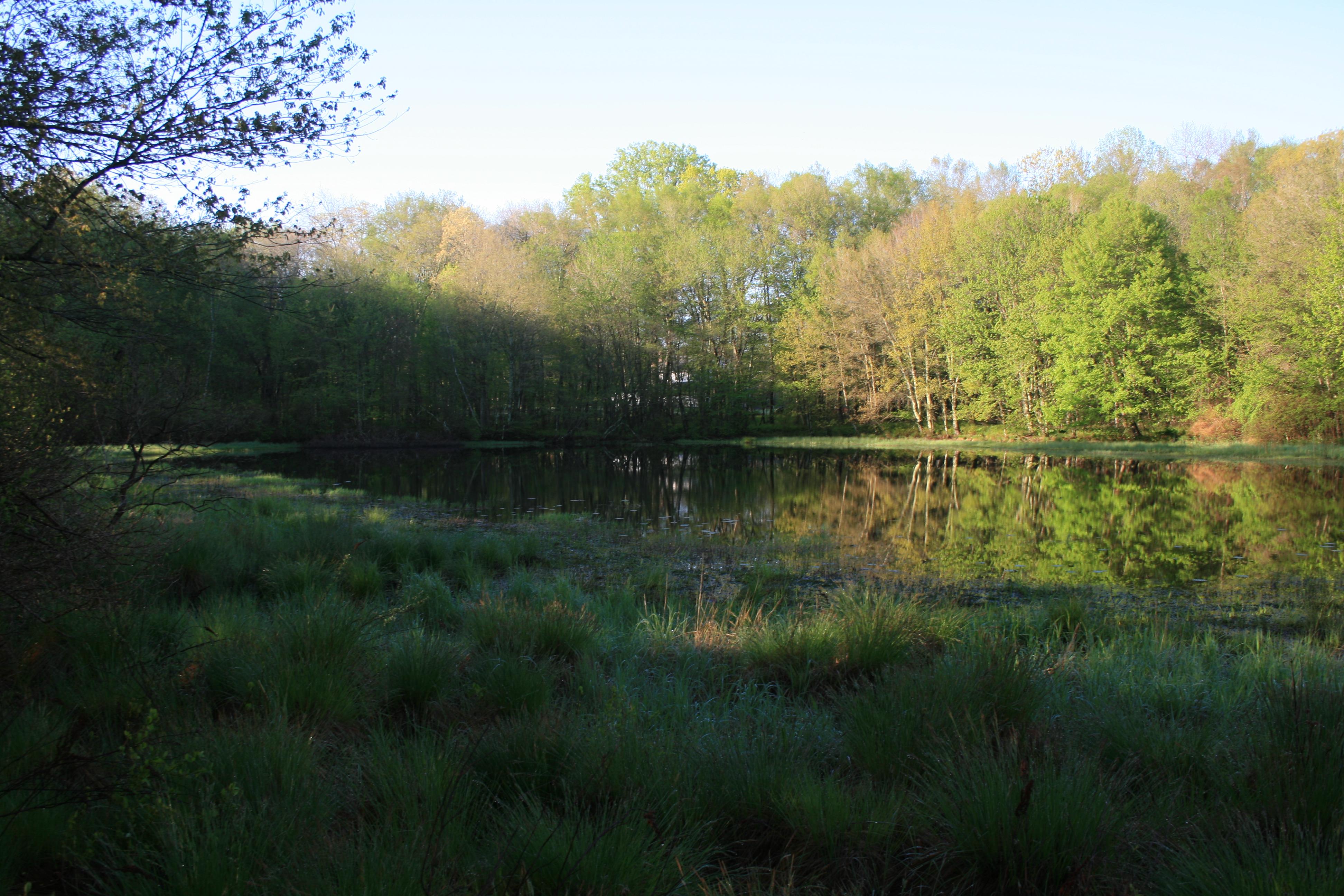 BHP pond