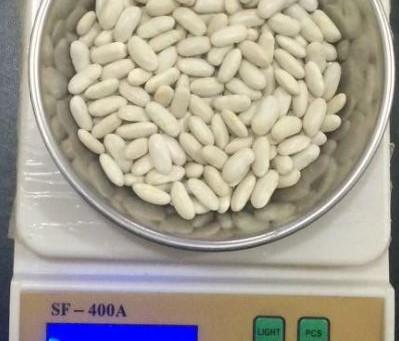 Egyptian White Beans