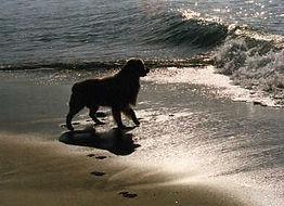 Copy of Joey at the ocean.jfif