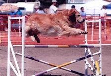 Erin agility jump 0904.jfif