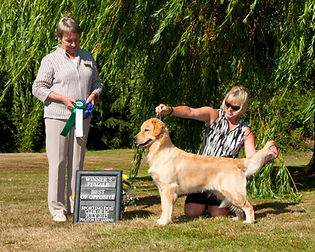2015-07-19 Tease Sporting Dog.jpg
