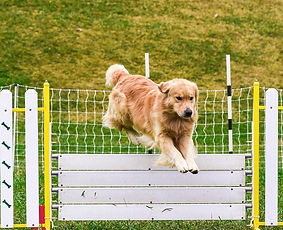 National 2016 Agility Trial Tease.jpg
