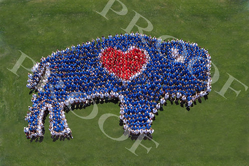 8x10 Human BuffaLove #3 Event photo