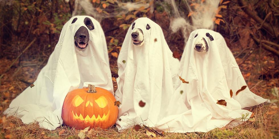 Halloween Plausch Trailen
