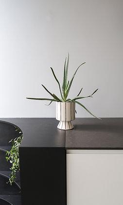 Grafische plantenpot