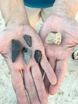 Megalodon teeth and fossil barnacle!