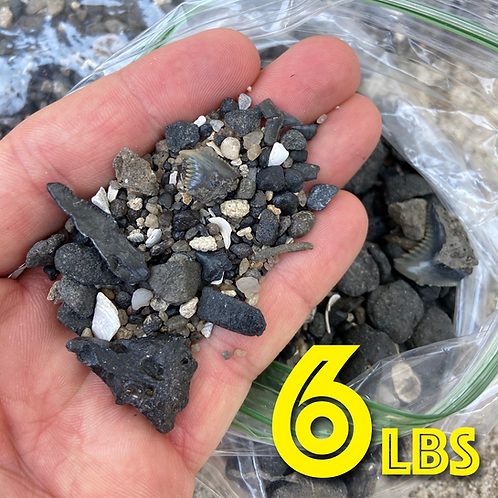 Shark Tooth Sand - 6 lbs Medium Box