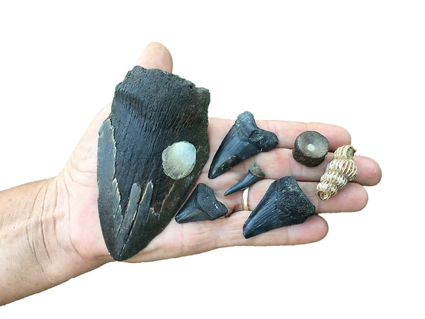 Megalodon in hand.png