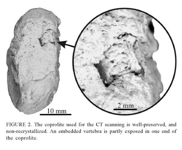 Crocodile coprolite from Milan et al. (2012) showing embedded fish vertebra