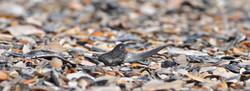 Fossil hunting Edisto Beach