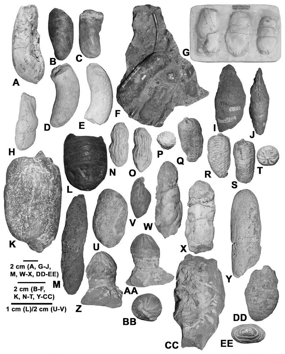 Various Mesozoic coprolites