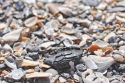Fossil hunting Folly Beach