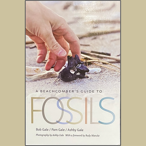 A Beachcomber's Guide to Fossils