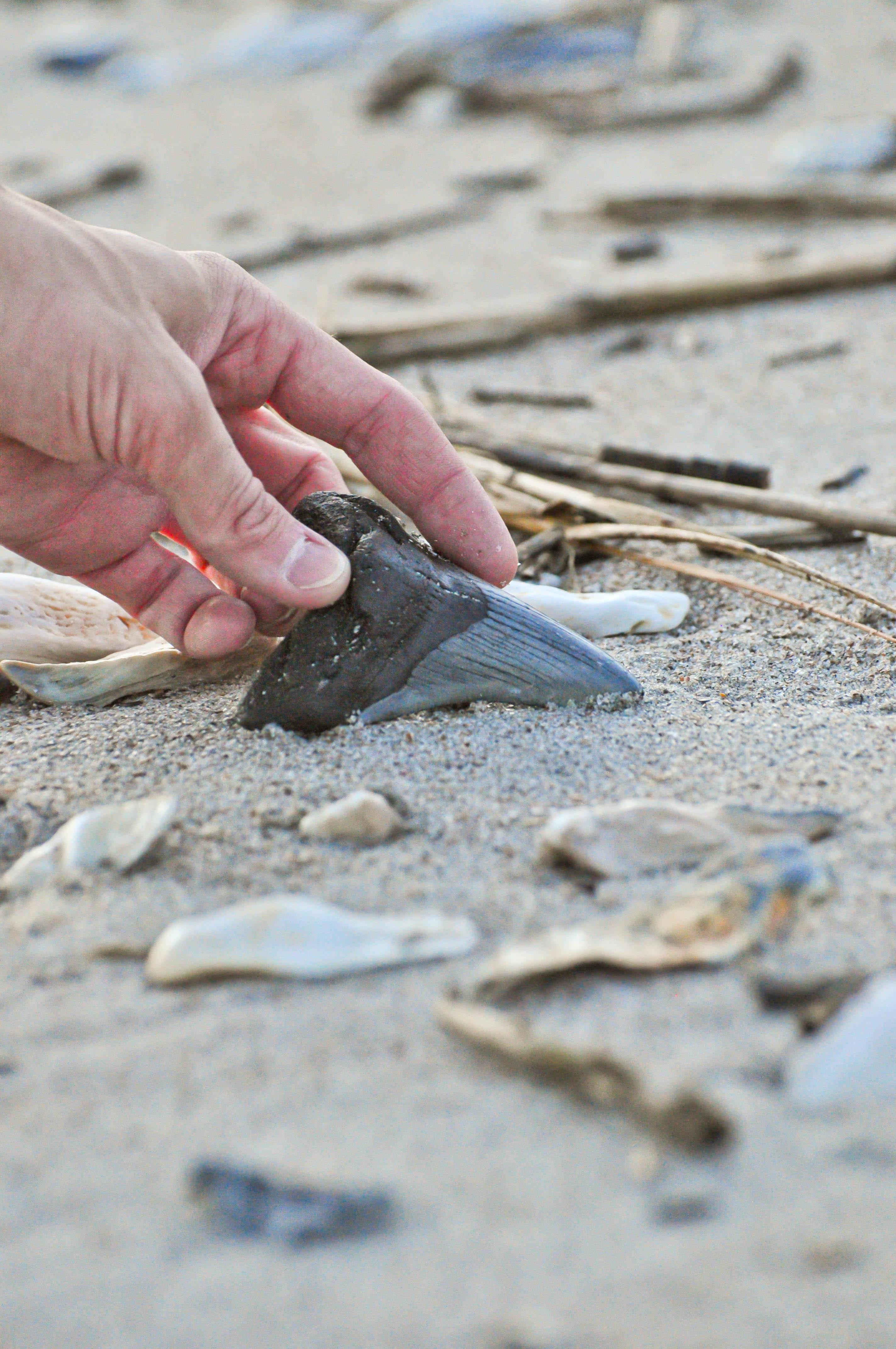 Charleston fossil hunting