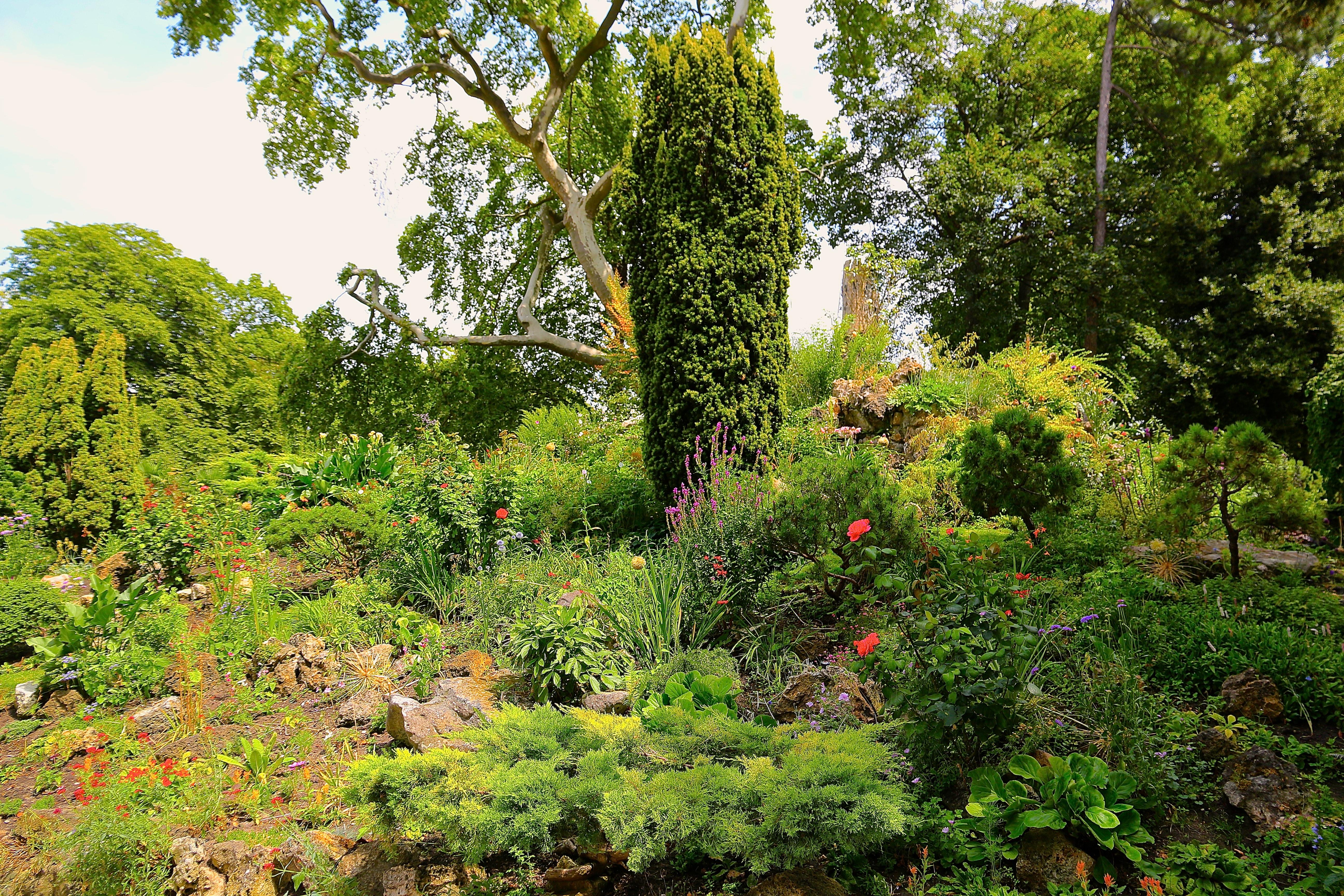 le jardin fleuri du Rocher