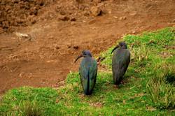 PARC NATIONAL DU MONT KENYA