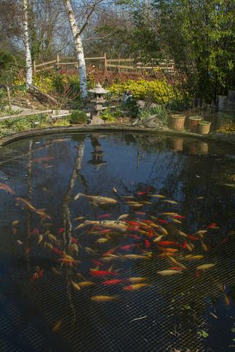 A swirl of fish!