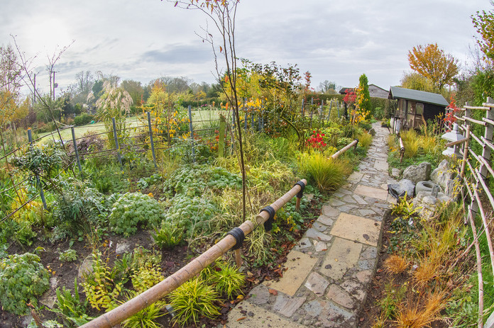 Tea Garden in autumn