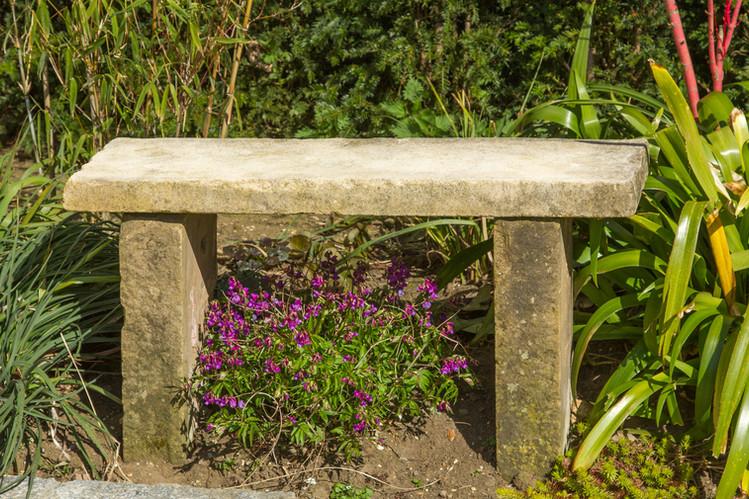 Lathyrus under bench