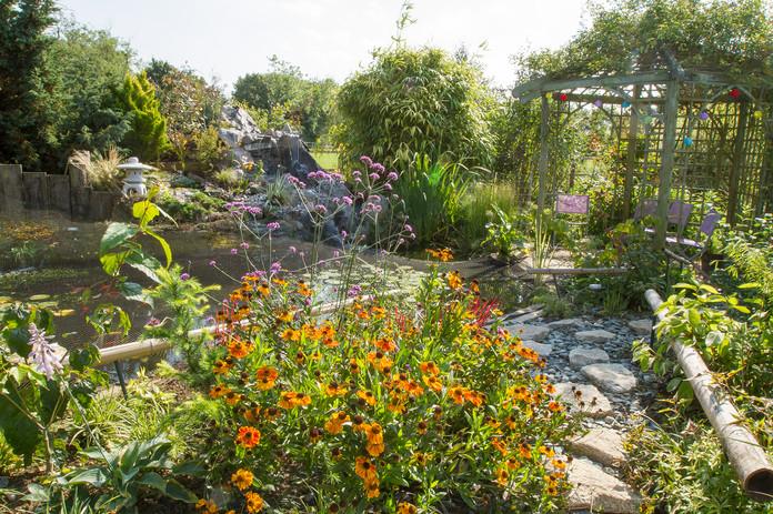 Helenium and Verbena bonariensis