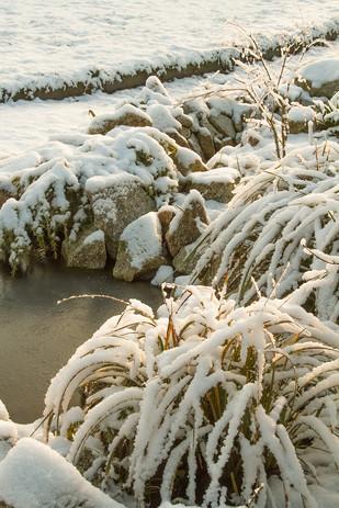 Snow on sedge