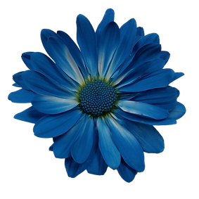 painted-blue-daisy-coloringtheworld-wwwg