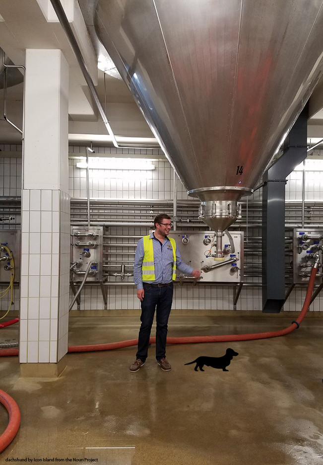 Weihenstephan and why we can thank dachshunds for good beer.
