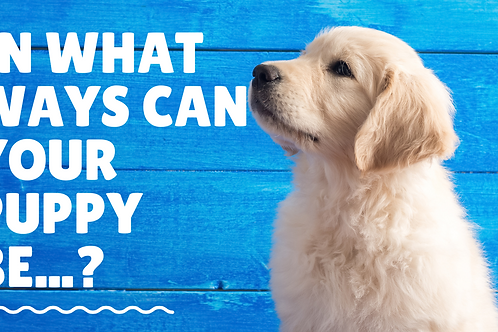 IN WHAT WAYS CAN PUPPIES BE. ..?