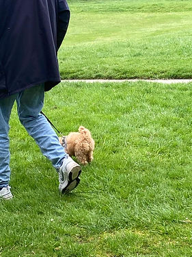 DAVE & POPPY LOOSELEAD WALKING.jpeg