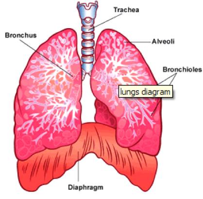 Breath: our first healer