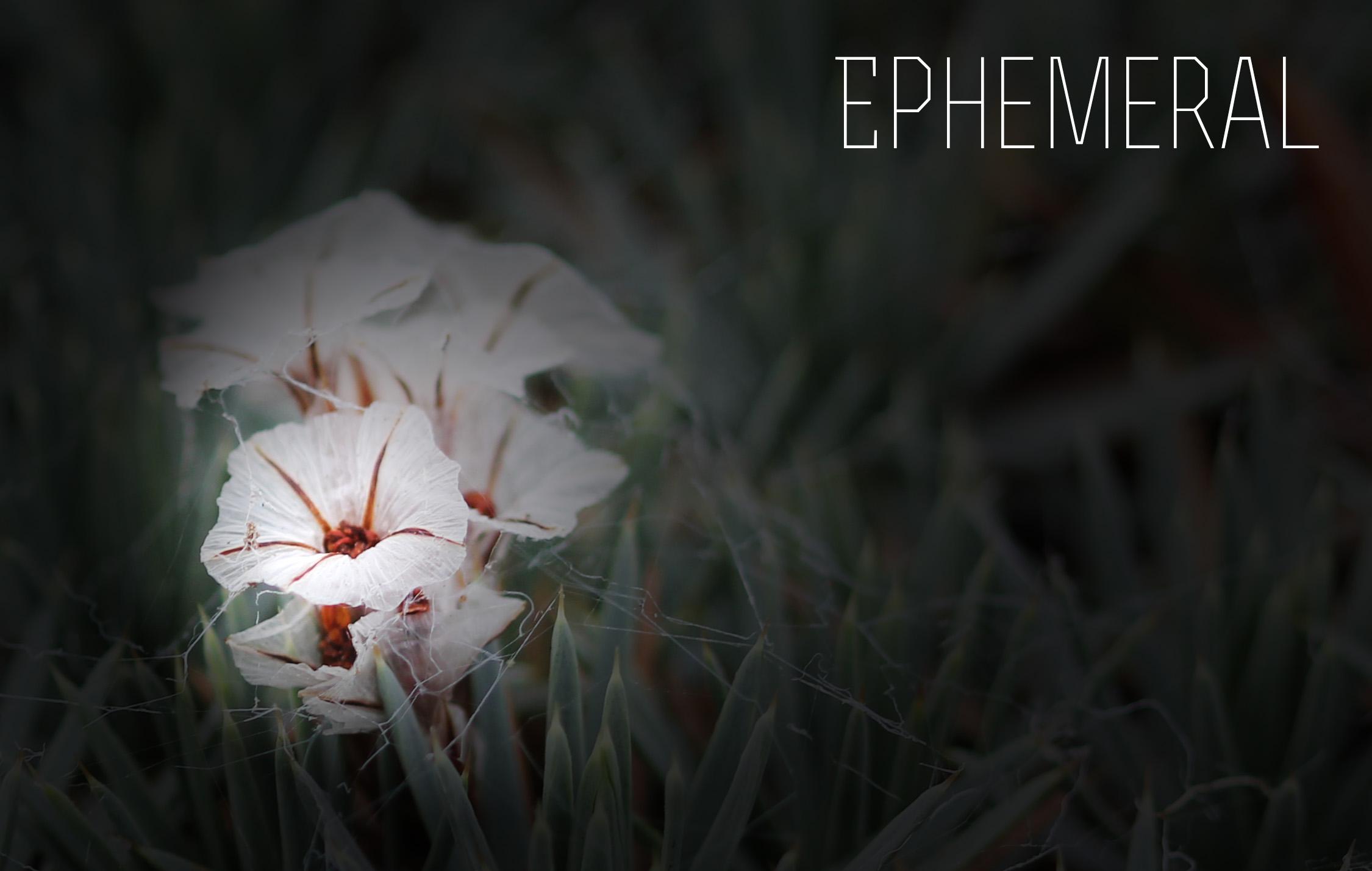 ephemeralflowers.jpg