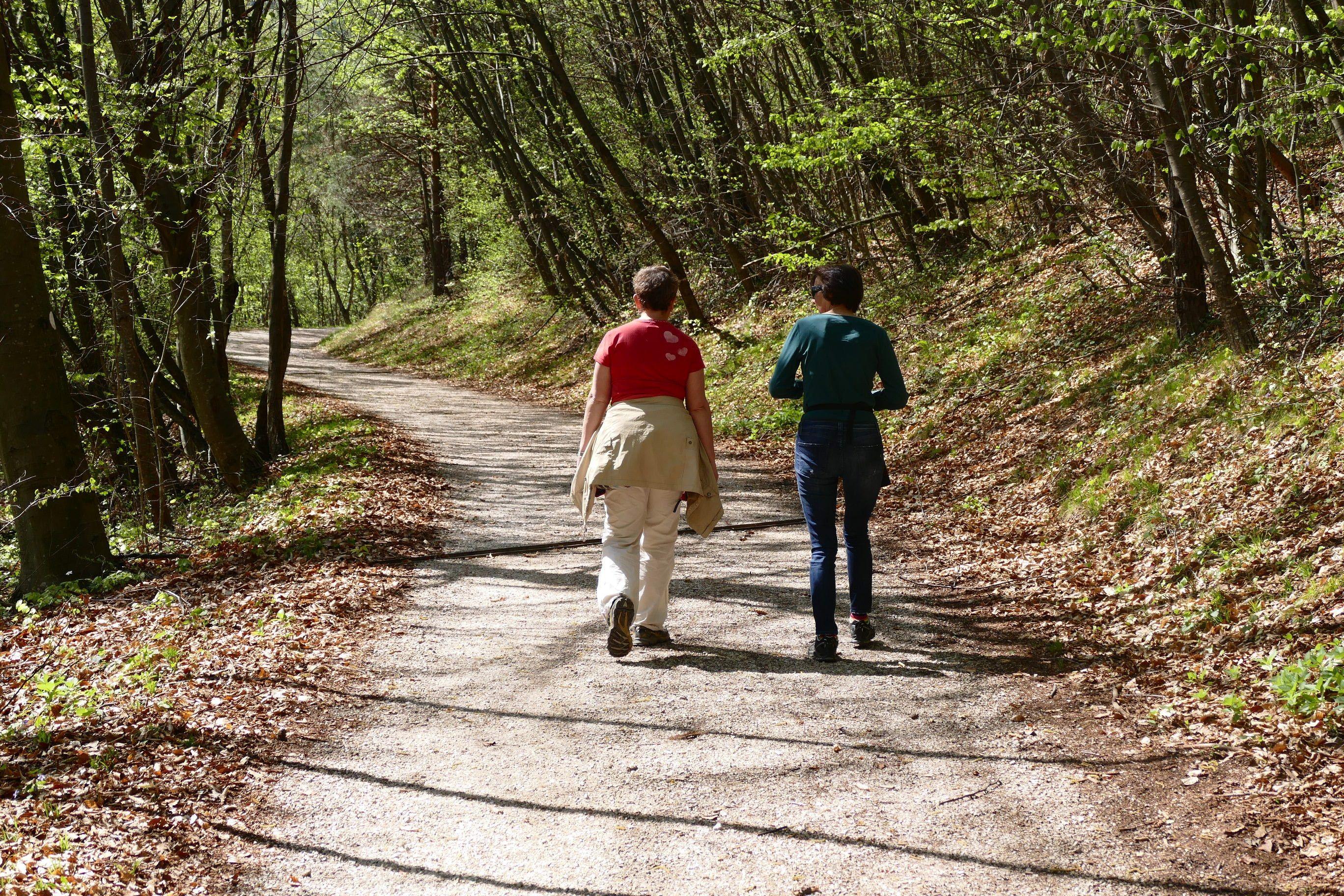 Spaziergang in den Wäldern Spaniens