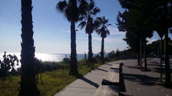 Sea and palms (environment) Zeige Liste der Fotos