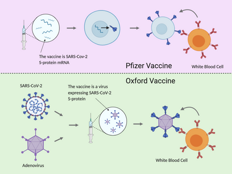 The COVID-19 vaccine, how are we actually doing?