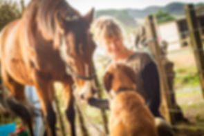 Happy moments with horses and dogs