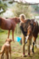 Briar horses and a dog