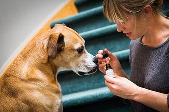 Briar giving a dog a remedy