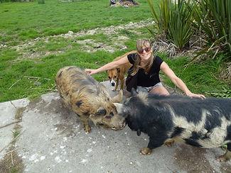 Briar treating pigs